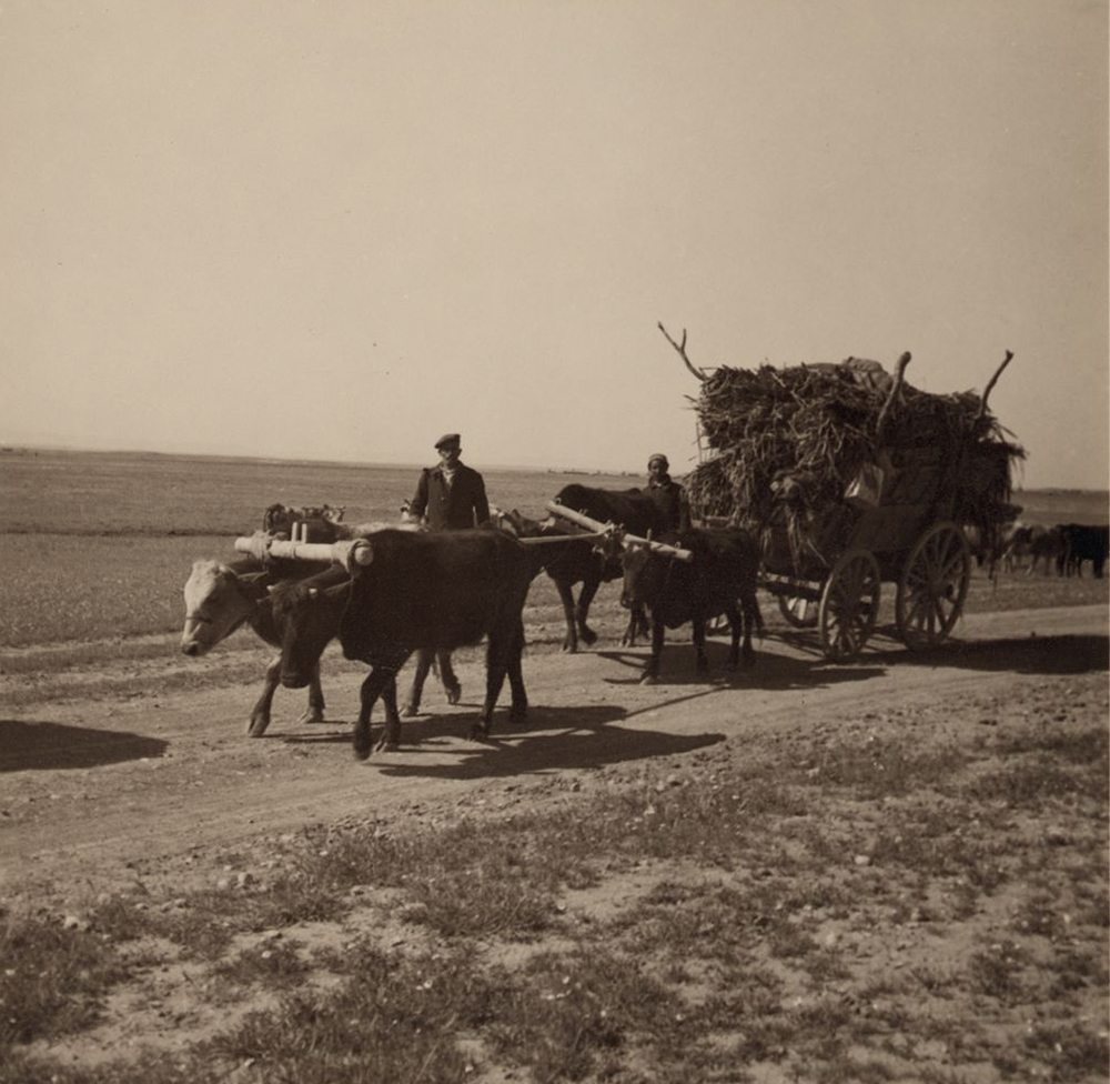 Assyrian refugees moving to a new village, 1939. Photograph by John D. Whiting.