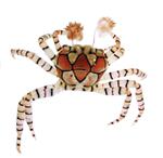 a boxer crab.