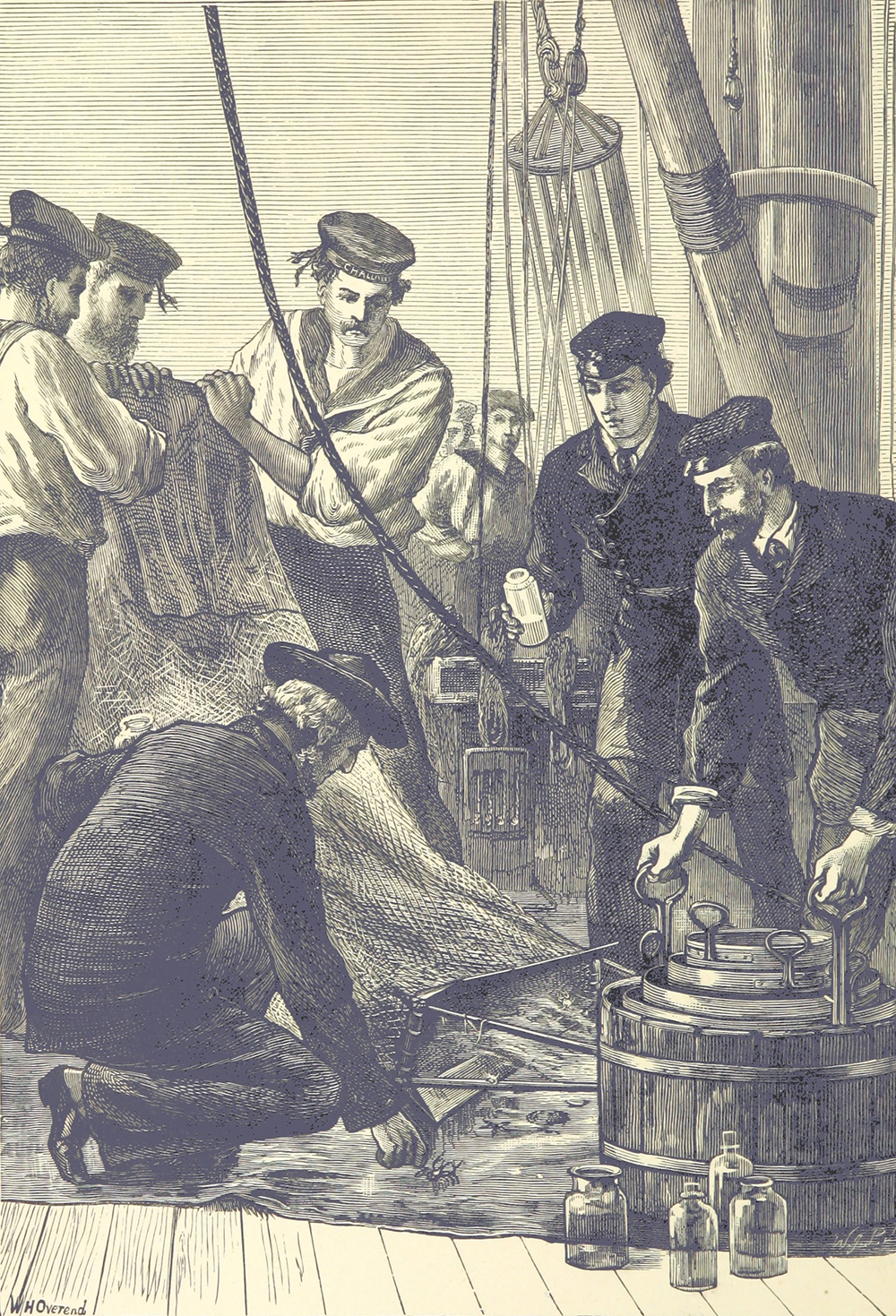 During the Challenger expedition, members of the crew examine creatures dragged up by the Challenger's nets. From The Sea: Its Stirring Story of Adventure, Peril & Heroism, 1887. British Library.