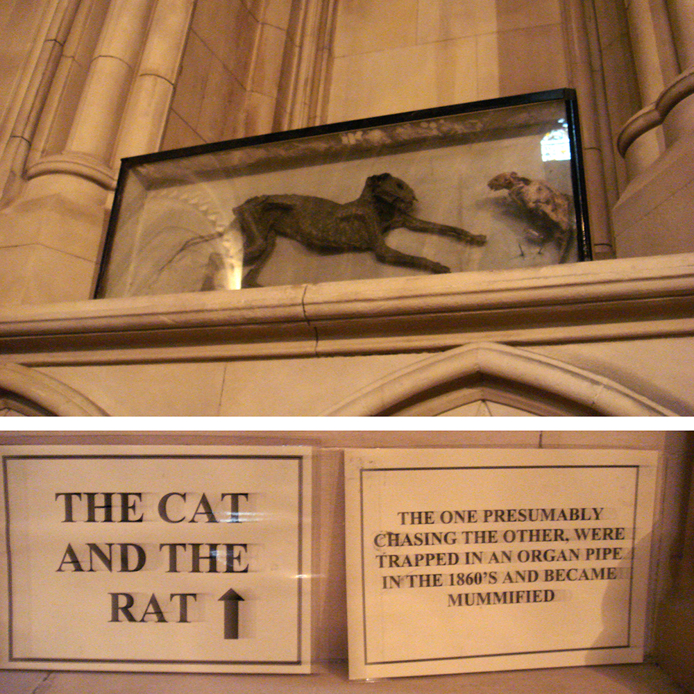 The Cat and the Rat at Christ Church Cathedral in Dublin, 2007. Photograph by Chris Dlugosz. Flickr (CC BY 2.0).