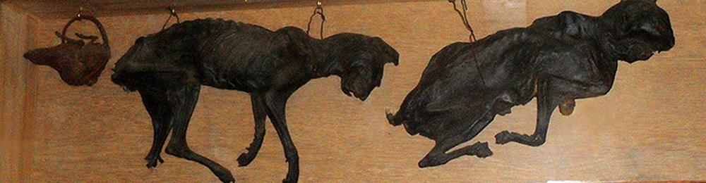 Two mummified cats displayed on the wall of the sixteenth-century Stag Inn, Hastings, England, 2011. Photograph by The Voice of Hassocks. Wikimedia Commons.