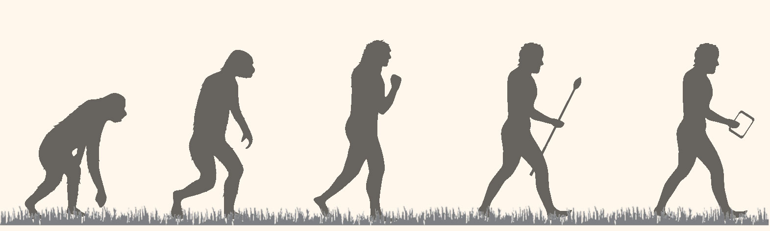 A diagram of silhouettes of an ape, a homo erectus, a homo neanderthalensis, a homo sapien with a spear, and a homo sapien with a tablet computer. They are standing on grass and all walking toward the right, suggestion the evolution of one into the other.