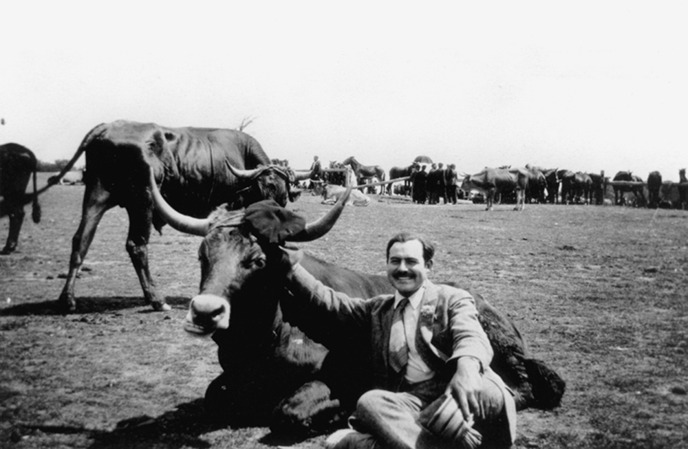 Ernest Hemingway with a bull near Pamplona, Spain, c. 1927. Ernest Hemingway Photograph Collection, John F. Kennedy Presidential Library and Museum, Boston.