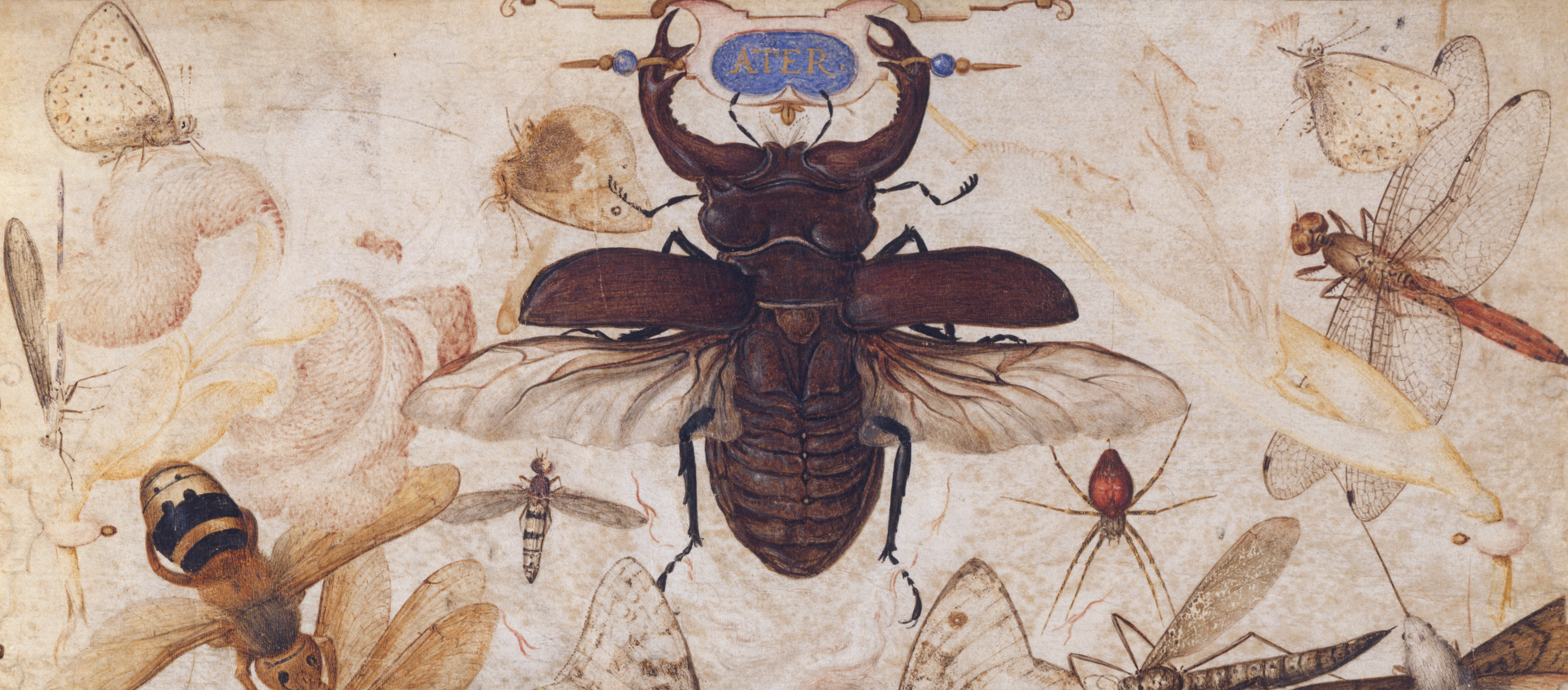 Insects and the Head of a Wind God, by Joris Hoefnagel, c. 1595.