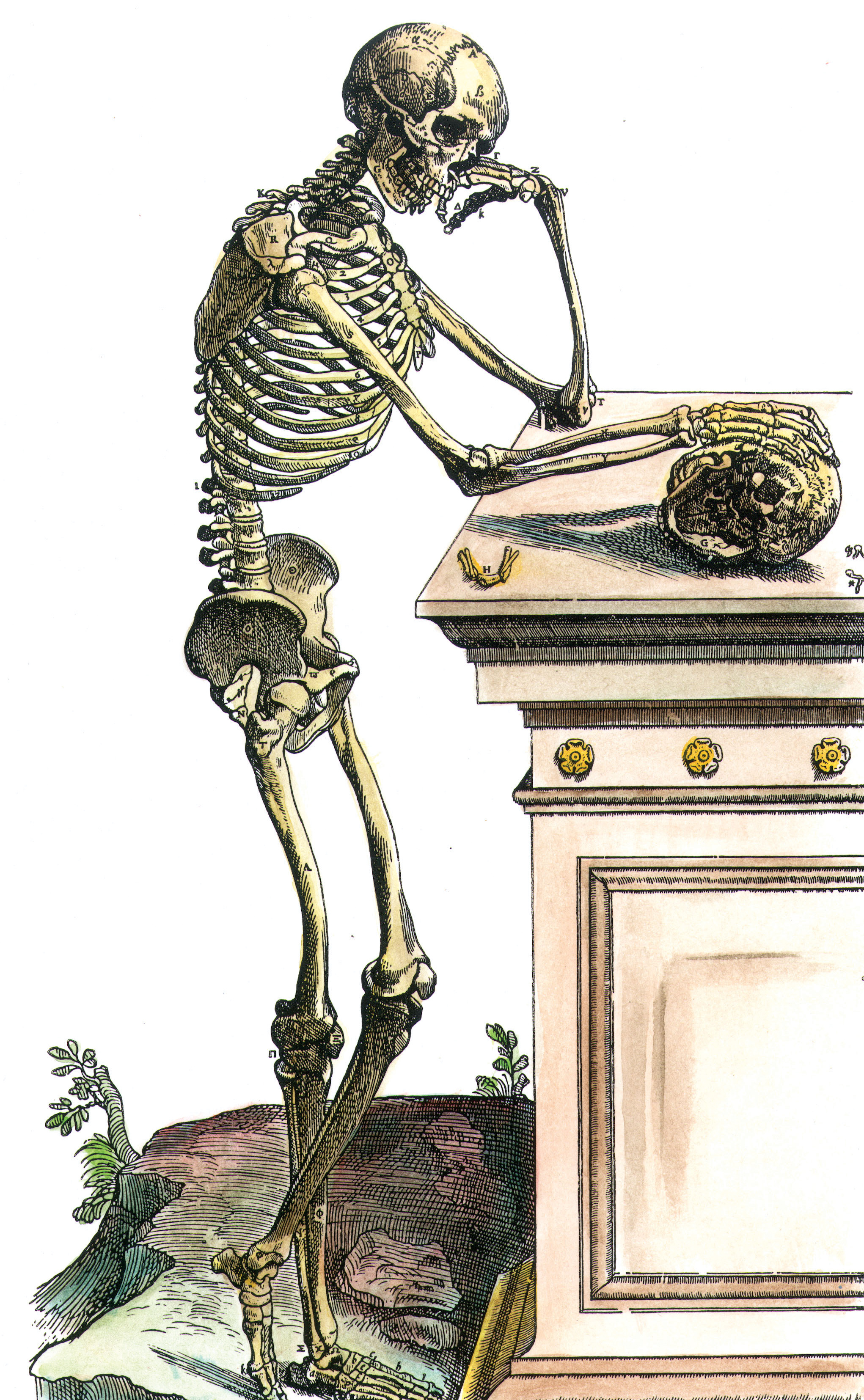 Skeleton contemplating a skull, from Andreas Vesalius' On the Structure of the Human Body, 1543.