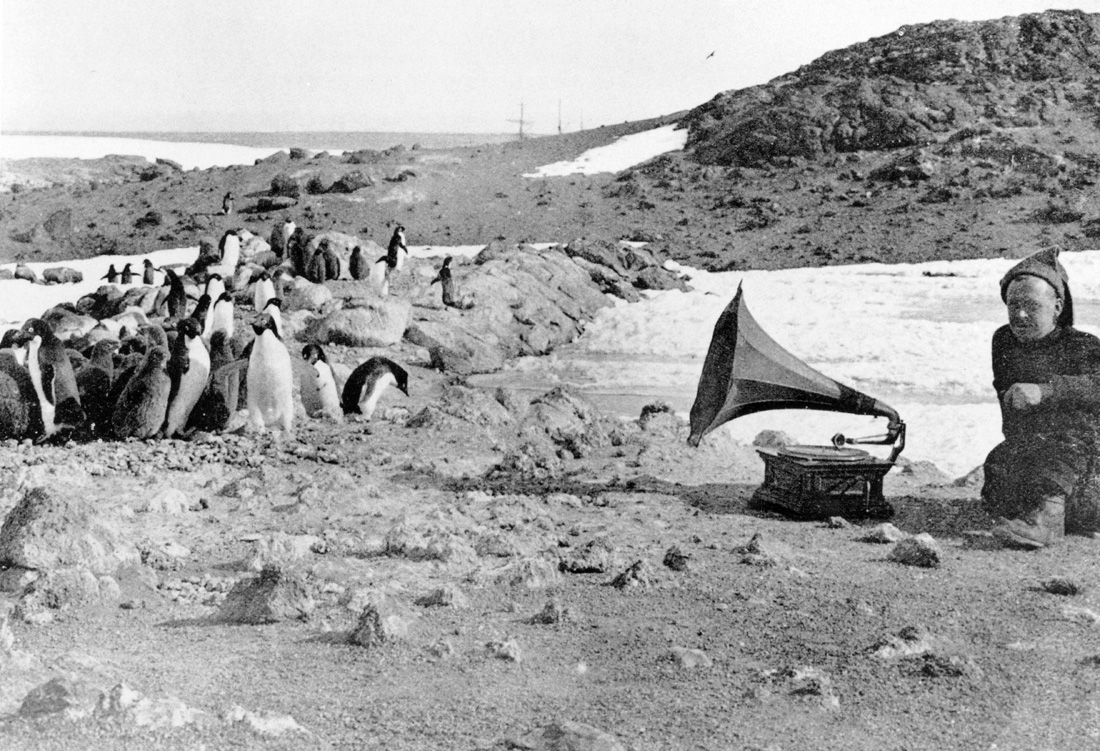 Penguins listening to a gramophone during Ernest Shackleton's expedition to Anartica, 1907.