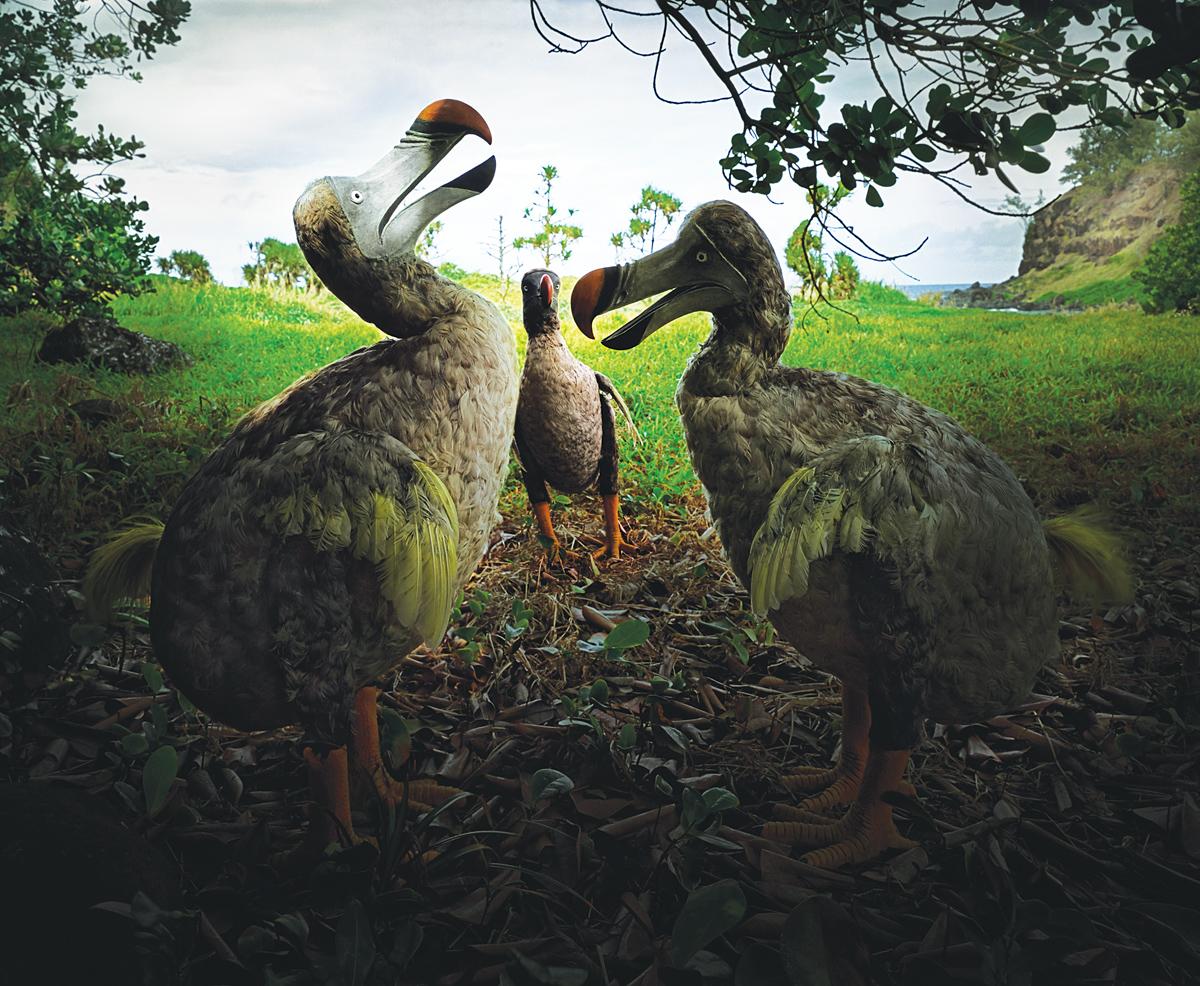 """""""Riviere des Anguilles #7, Mauritius,"""" 2002. Photograph by Harri Kallio. © Harri Kallio."""