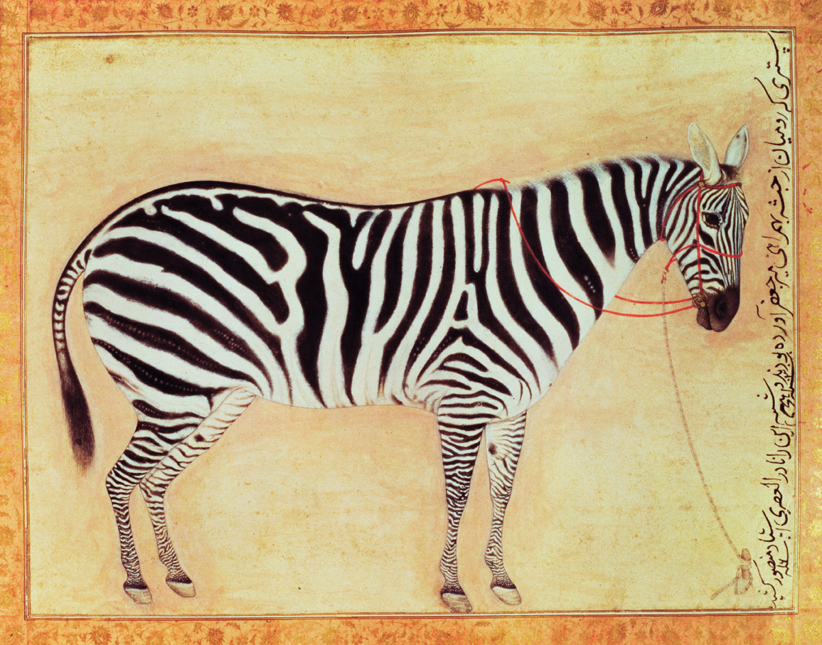 Zebra, Mughal miniature, by Mansur, 1621.