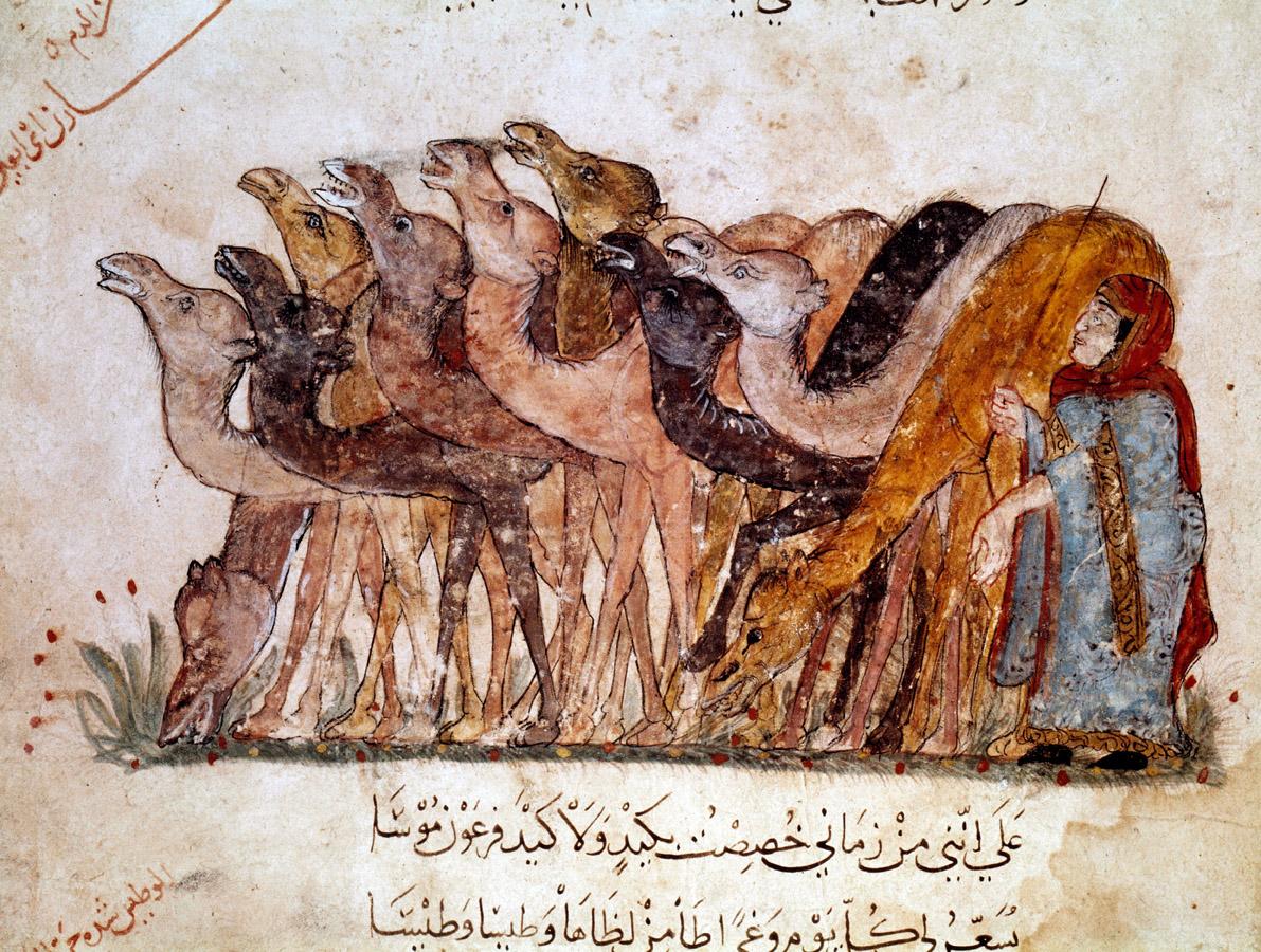 Camels in desert caravan