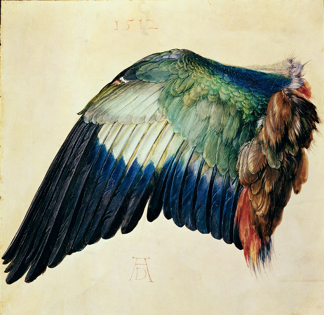Wing of a Blue Roller, by Albrecht Dürer, 1512.