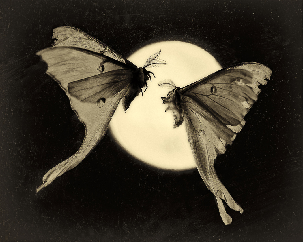 """Luna & Luna no. 2,"" from Lepidoptera Portraits, 2007."