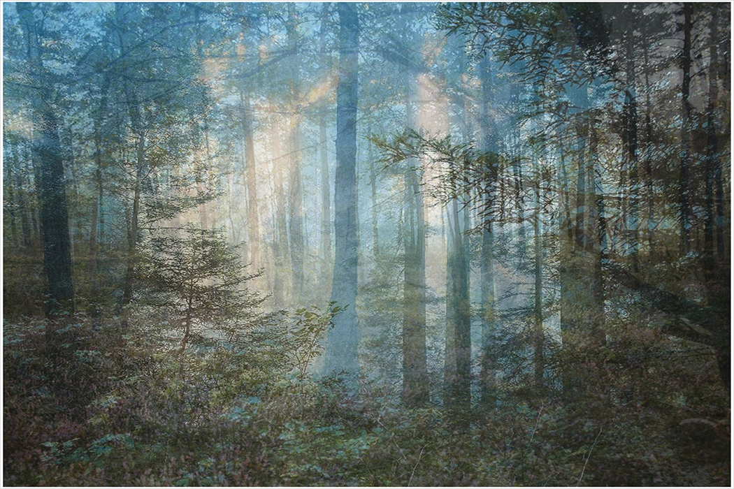 Photographic illustration of a blue forest.