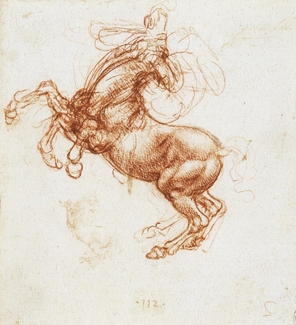 Rearing horse, by Leonardo da Vinci, c. 1505.