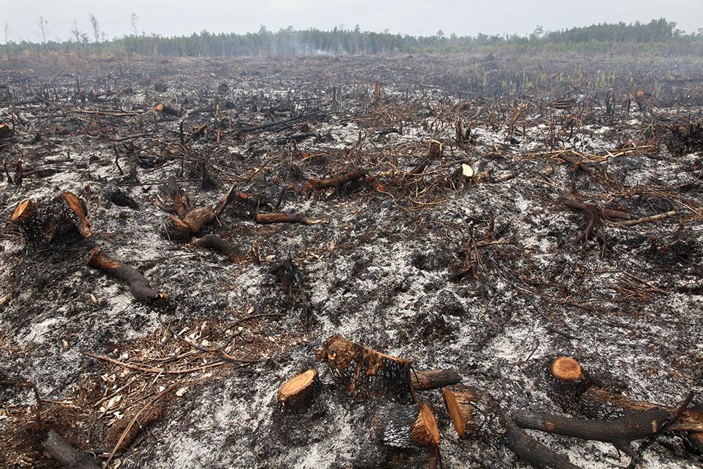 Illegal deforestation, Indonesia, 2011. Photograph by Jean Gaumy. © Jean Gaumy/Magnum Photos.