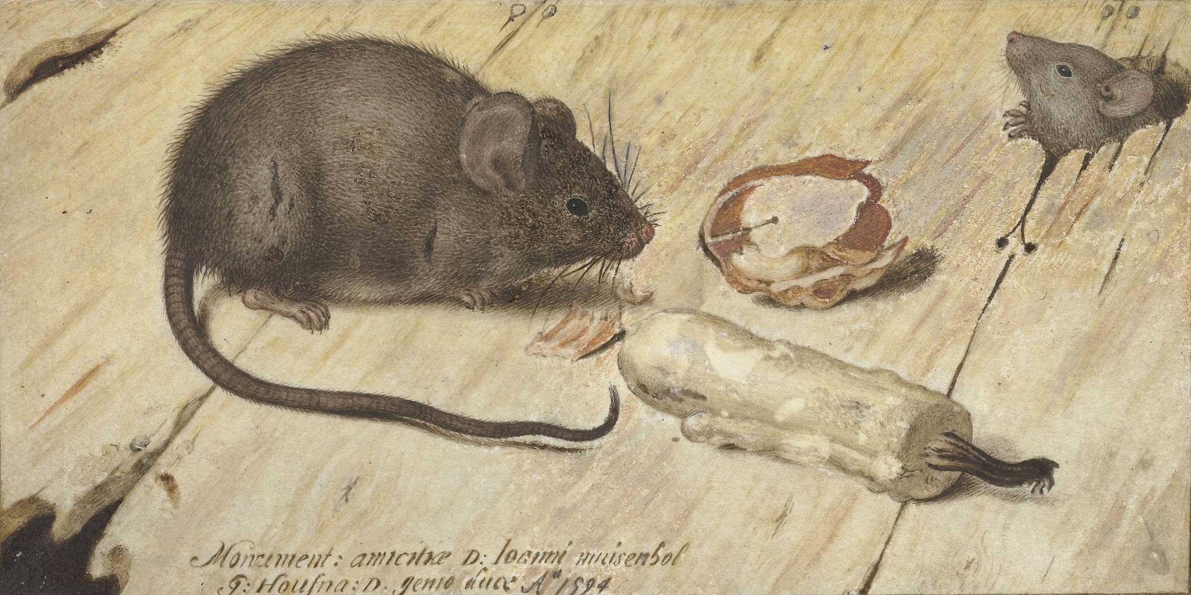 Two Mice (detail), by Joris Hoefnagel, 1594.