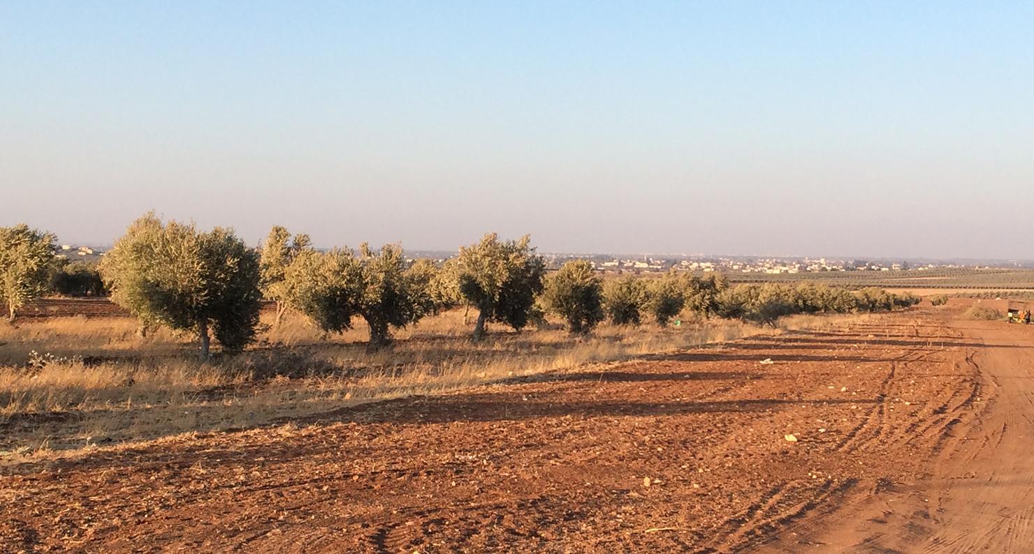 A view of Dara'a, Syria, from al-Ramtha, Jordan, 2014. Photograph by Rana B. Khoury.
