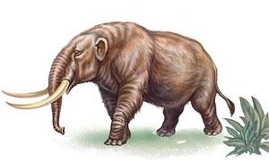 Drawing of a mastodon
