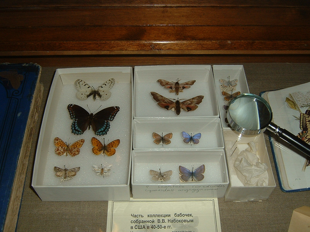 Butterflies collected by Vladimir Nabokov, Nabokov House, Saint Petersburg. Photograph by Alex Bakharev.