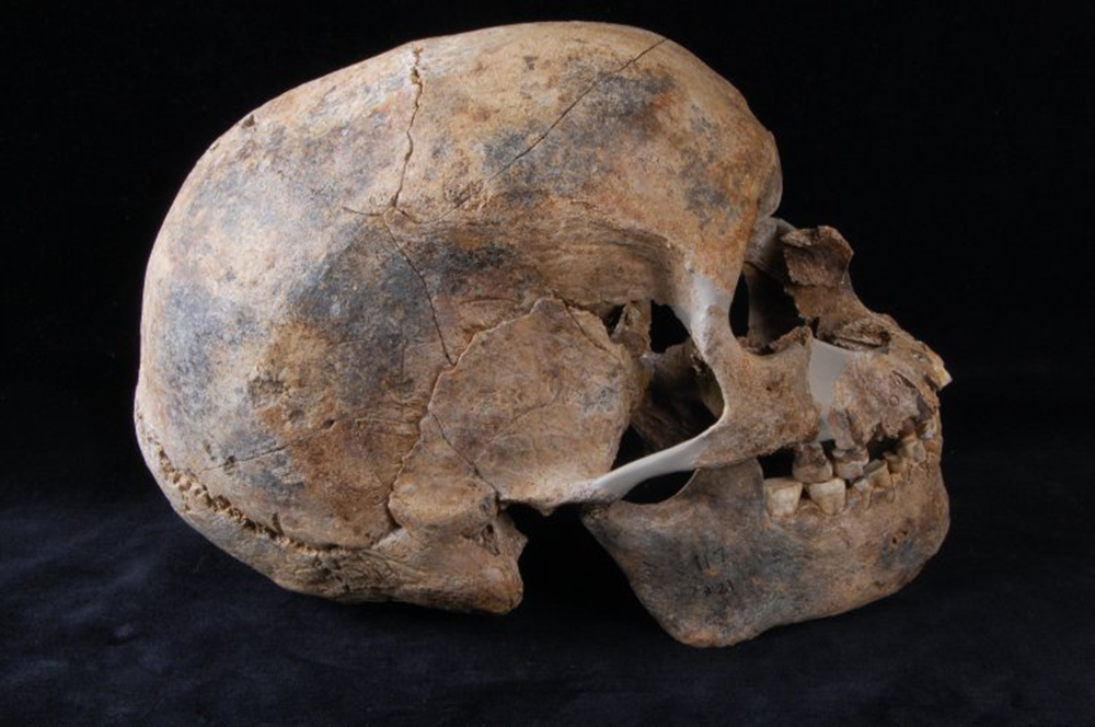 Skull of a male aged thirty-five to fifty, Paleolithic period. © The British Museum.