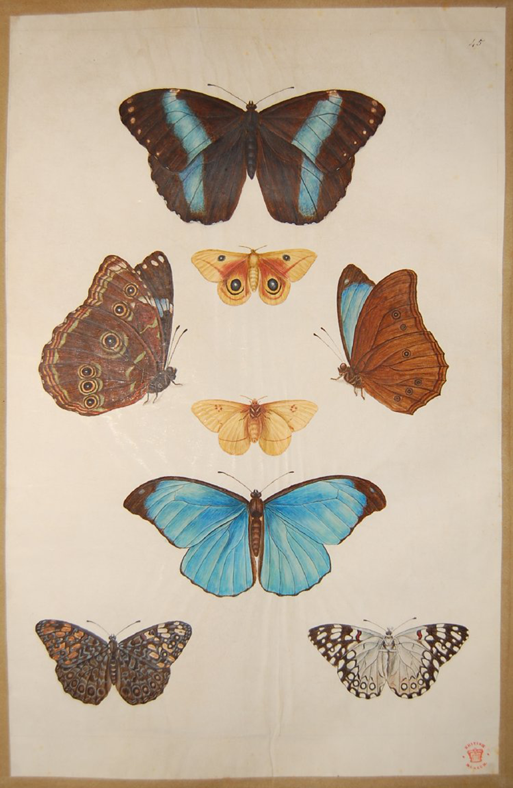 """Eight studies of four butterflies seen from above and below, from """"Roberts's Drawings of Plants, Birds, Shells &c., Vol. II,"""" by Nicolas Robert. © The Trustees of the British Museum."""