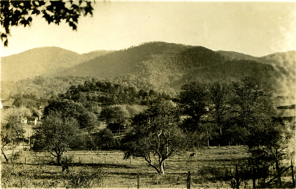 View from Shelton property, looking southeast down Pigeon Road toward Fitzgerald lands. Haywood County Public Library, History Collection.