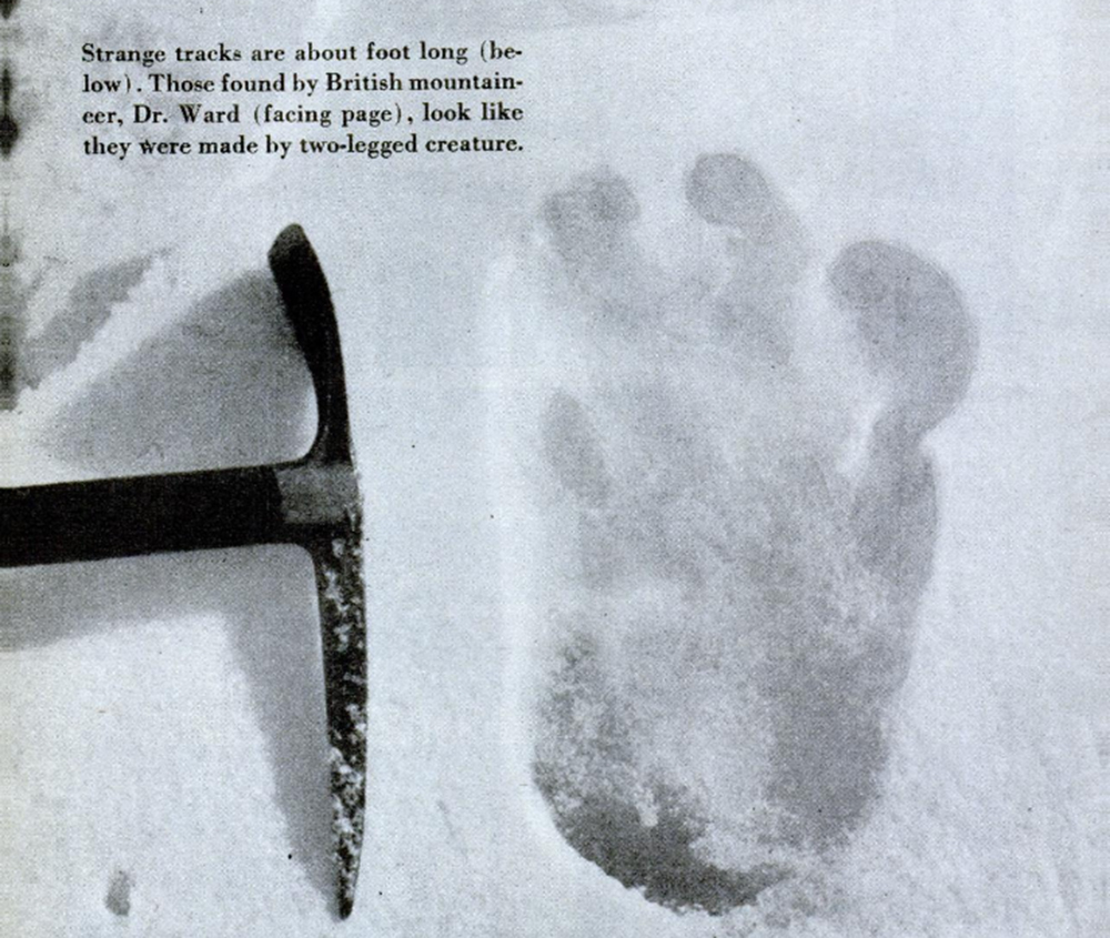 "Photograph of alleged yeti footprint found by Michael Ward, Menlung Glacier, 1951, by Eric Shipton. From Gardner Soule, ""The World's Most Mysterious Footprints,"" Popular Science, December 1952. Wikimedia Commons."