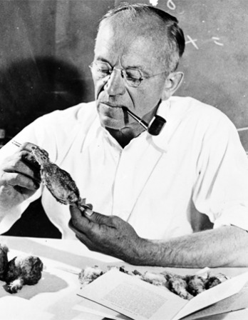 Photograph of American environmentalist Aldo Leopold.