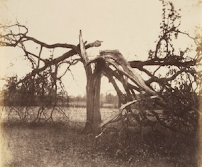 Oak Struck by Lightning, Badger, 1856.