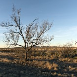 Midwinter rural scene in far-west Texas. February 15, 2014. Carol M. Highsmith. The Library of Congress.
