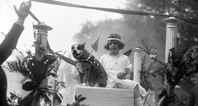 Sgt. Stubby shares a float with Miss Louise Johnson for an animal parade down Washington D.C.'s Pennsylvania Avenue in 1921.