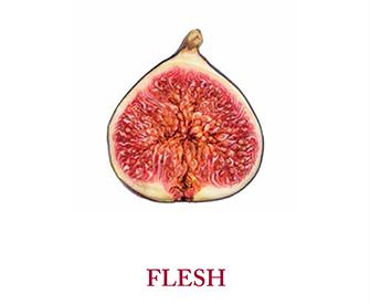 Flesh, the fall 2016 issue of Lapham's Quarterly.