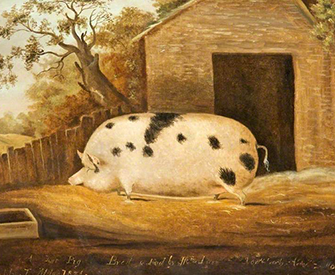 Gloucester Old Spot, 1834, by John Miles. Gloucester Museums Service Art Collection.