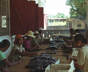 Women grading vanilla beans, Sambava, Madgascar, 2001. Photograph by Jonathan Talbot, World Resources Institute.