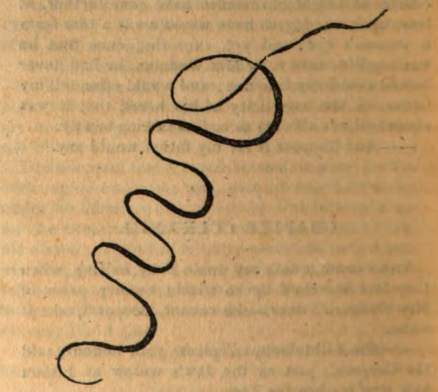a printed squiggle.