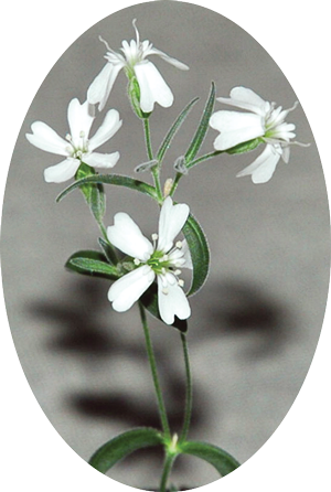 small white flowers on green stems