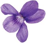 a violet.